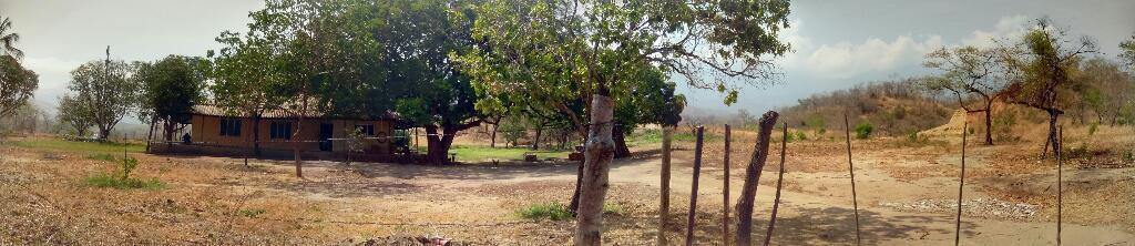Tierra ganadera y acta para sembrar planas