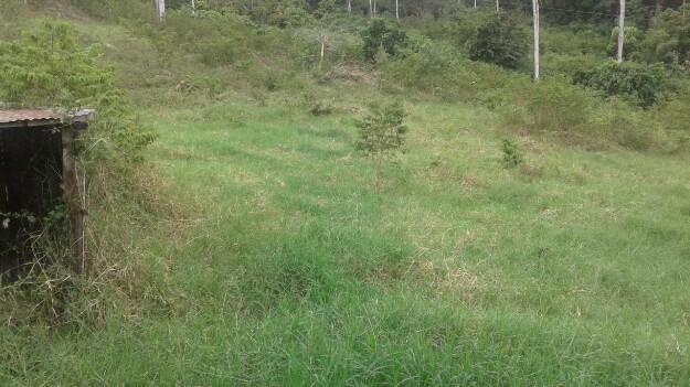 vendo parcela de tres hectareas en la Vereda la cabaña del municipio de giron