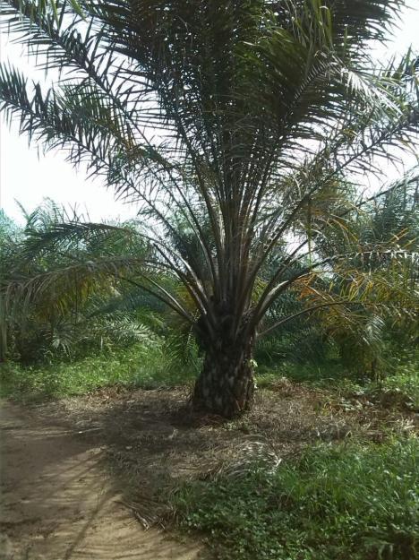finca palmera